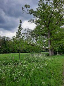 foto van een groen veld buiten, met een boom.